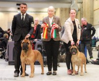 CAC/CACIB Show i Herning (Dommer: Per Kr Andersen, N)